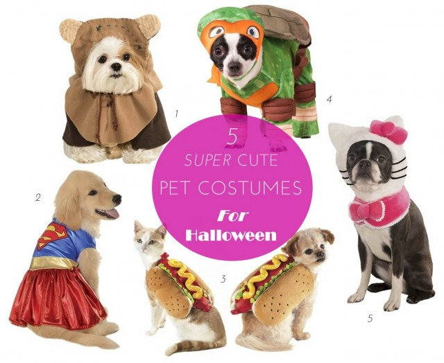 Midtown Girl by Amy Chandra - Super Cute Pet Costumes For Halloween