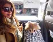 dolce chandra - midtown pups febreze x aspca #noseblind event